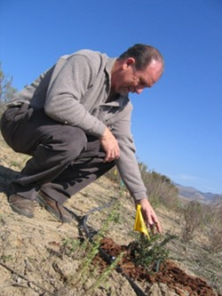 PLANNING AHEAD :  Dr. V.L. Holland, a retired Cal Poly biology professor, has been leading Cal Poly students as they plant native vegetation in a former Union Asphalt mine pit with help from a grant from the company. - BY KATHY JOHNSTON