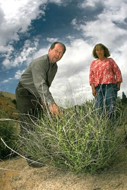 THE FIX IS IN :  Biologists V.L. Holland and Jennifer Langford are passionate about ecological restoration at the excavated slopes of Rocky Canyon granite mine. - PHOTO BY CHRISTOPHER GARDNER