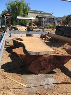 NEW LIFE :  Don Seawater of Pacific Coast Lumber transforms a fallen cypress tree into beautiful, functional wood for rustic tables. - PHOTO BY KATHY JOHNSTON