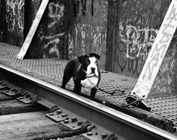 """""""DEUCES WILD� FIRST PLACE ANIMALS - BW: - BILLY FREDLUND"""