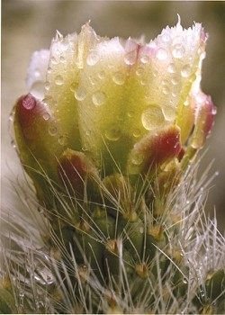 WET CACTUS:  Third Place 2 - NANCY KOREN