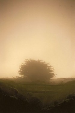 """EAVESDROPPING IN THE MIST� FIRST PLACE LAND/SEASCAPE COLOR: - NANCY A. WATTS"
