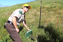 TRIPLE C:  California Conservation Corps Fish Habitat Specialist Meredith Hardy shows off a portion of the rainwater capture system she helped the Cal Poly Beef Unit install. It should lessen the amount of water cattle use from groundwater wells along Pennington Creek. - PHOTO BY DYLAN HONEA-BAUMANN