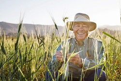 LARRY'S LOVE :  Los Osos farmer Larry Kandarian is passionate about bringing back ancient grains and seeds from camelina to kamut. - PHOTO BY SARA POPP