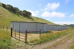 PRECIOUS RESOURCE:  Four tanks in a valley west of El Chorro Regional Park can hold up to 400,000 gallons of rainwater captured off roofs at the Cal Poly Beef Unit. - PHOTO BY DYLAN HONEA-BAUMANN