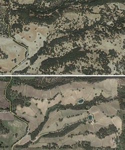 OAKED:  In preparation for their Adelaida Hills vineyard, Justin Vineyards and Winery cleared 100 acres—54 of which were densely wooded—of native oak woodland in 2011. These satellite images from September 2010 and August 2013, respectively, show the before and after of the property. The contracted arborist later sued the company for breach of contract. - SCREENSHOTS COURTESY OF GOOGLE EARTH