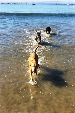 SWIM, RUN, FUN!:  Olde Port Beach offers plenty of dog fun, and the riprap makes an effective barrier to corral the canines. - PHOTO BY GLEN STARKEY