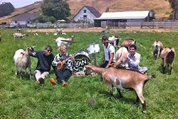 PET SOUNDS?:  High-energy swing and surf rock band Van Goat plays Frog and Peach on Dec. 29. - PHOTO COURTESY OF VAN GOAT