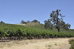 JUSTIN SCREWS UP:  It was oak trees versus vineyards this year when the county found out that Justin Vineyards and Winery had leveled a swath of native trees and graded land on one of its properties. - FILE PHOTO BY CAMILLIA LANHAM