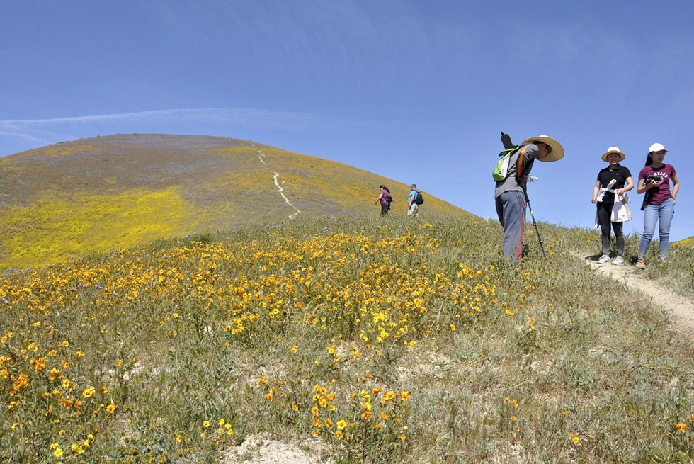 SUPER BLOOM POWER The tourists who invaded the Carrizo Plain National Monument this past spring to view the most vibrant bloom in years have rallied behind the effort to maintain the status quo in the face of a directive from President Donald Trump to review its designation. - PHOTO CAMILLIA LANHAM