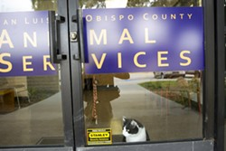 SHELTER DILEMMA Facing $4.4 million in costs to help SLO County construct a new animal shelter, the cities of Paso Robles and Atascadero are mulling building their own facility in North County. - FILE PHOTO BY JAYSON MELLOM