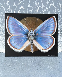 GONE FOR GOOD Helen K. Davie's work features 12 different animals that have become extinct in the past 100 years, like this Xerces Blue Butterfly. - IMAGE COURTESY OF HELEN K. DAVIE