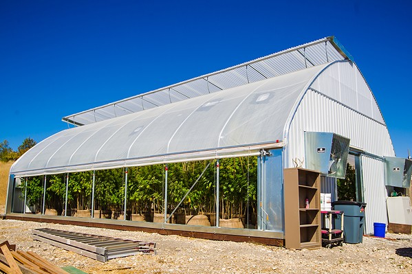 JUST SAY NO? The SLO County Board of Supervisors will continue a hearing to establish new marijuana regulations on Oct. 20, which includes a cap on outdoor grows and no cap on indoor grows, like this greenhouse in North County. - FILE PHOTO
