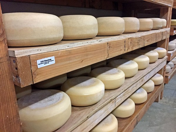 SAY CHEESE Vintage Cheese Company, owned by Los Osos residents Ryan and Erin Davis, was officially founded in 2011 with the goal of pairing local, California-sourced milks with time-honored cheesemaking know-how. - PHOTO COURTESY OF VINTAGE CHEESE COMPANY