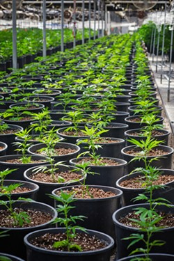EMERALD CITY Grover Beach is a step closer to allowing commercial cannabis businesses to sell and manufacture recreational cannabis products. - FILE PHOTO BY JAYSON MELLOM