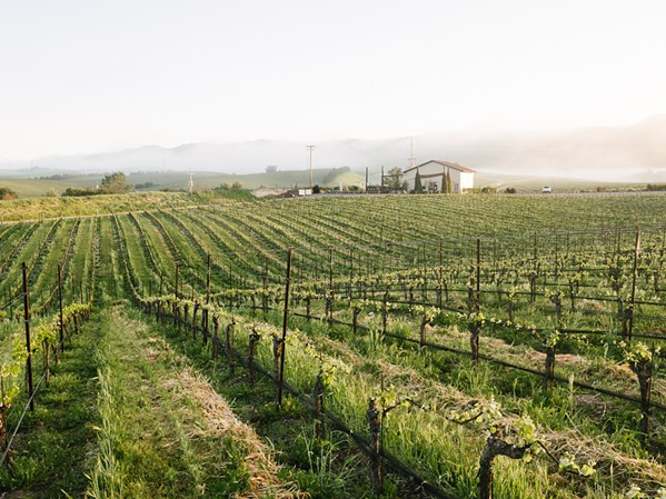 PRACTICES FOR THE LONG HAUL Chamisal Vineyards in the Edna Valley is SIP Certified in both the vineyard and the winery, something only one other winemaker can claim—Niner Wine Estates in Paso Robles. - PHOTO COURTESY OF CHAMISAL VINEYARDS