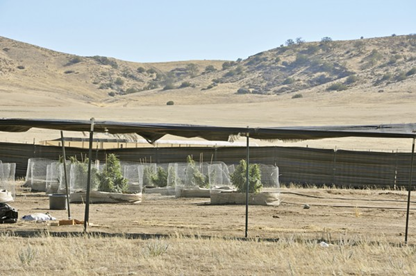 TARGETED SLO County started cannabis abatement hearings for alleged illegal growing operations in May. Although there are cases across the county, the California Valley has the largest number: approximately 100 active grows and 109 abandoned cultivation sites, according to a county staff report. - FILE PHOTO BY CAMILLIA LANHAM