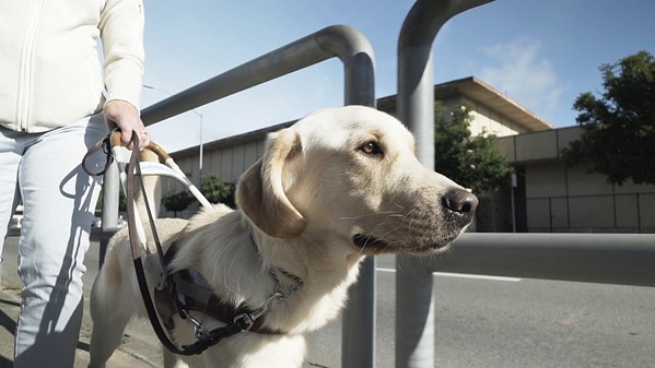 GOOD DOG! Pick of the Litter follows a litter of puppies from birth, through training, and onto their work as Guide Dogs for the Blind. - PHOTO COURTESY OF KTF FILMS