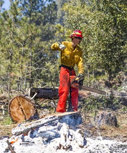TRIMMING AND BURNING Starting a chainsaw, a U.S. Forest Service crewmember gets ready to saw tree trunks into more managable pieces as part of a pile burn conducted in Los Padres National Forest in April 2018. - FILE PHOTO BY SPENCER COLE