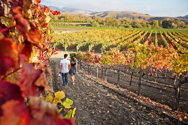 VINE'S PERSPECTIVE Preserving the history of area vineyards means digging deep—not just into the soil, but into garages, attics, and even yard sales—for documents and photos that piece together time, land, and humanity. - PHOTO COURTESY OF SLO WINE