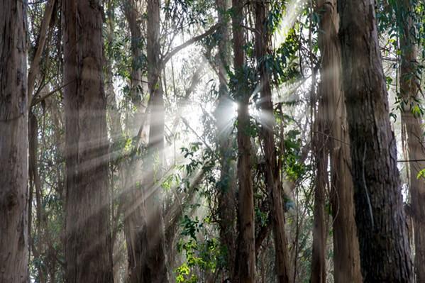 Light - PHOTO BY JAYSON MELLOM