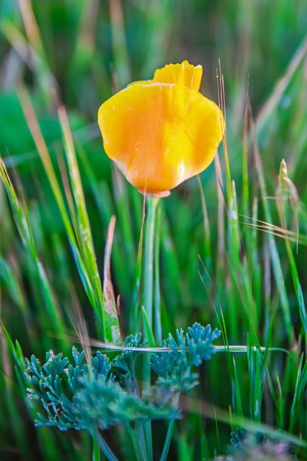 Flower - PHOTO BY JAYSON MELLOM