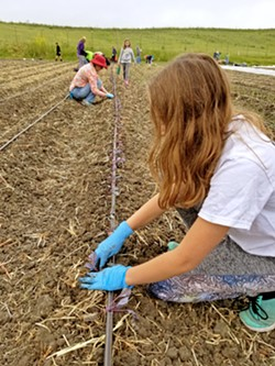 GROWING UP My older daughter was among the volunteers planting red-leaf lettuce at Firstfruits Farm on a drizzly Saturday morning in late April. Everything grown at this farm will be donated to community members in need. - PHOTO COURTESY OF BRET ROOKS