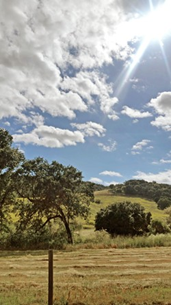 CAPTIVATING VIEWS We savor the scenic drive to and from the Adelaida area of Paso Robles. Memorial Day afforded stunning views of the rolling hills covered in still-green grass. - PHOTOS BY ANDREA ROOKS