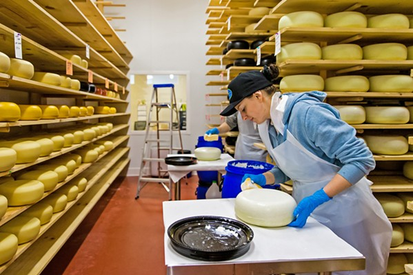 DEEP BREATHS Shelby Van Wagner (above) paints a plastic coating on the rind of a Central Coast Creamery Holey Cow round. It will allow the cheese to breathe and prevents moisture from escaping too rapidly. - PHOTO BY JAYSON MELLOM