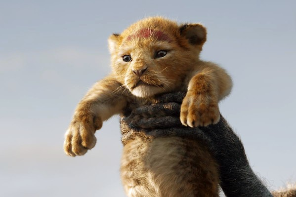 DESTINY Young Simba (voiced by JD McCrary) doesn't yet realize the scope of his responsibilities to come, in The Lion King. - PHOTO COURTESY OF WALT DISNEY PICTURES