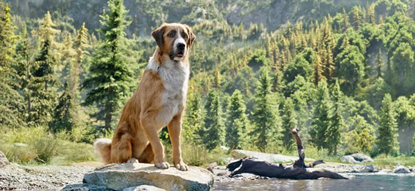 BUCK! Jack London's story of an unruly St. Bernard and Scotch shepherd mix, who's dognapped from his owner and goes on a grand adventure during the Klondike gold rush, has some off-putting CGI but is still a compelling family film. - PHOTO COURTESY OF TWENTIETH CENTURY FOX