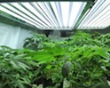 County greenlights Edna Valley cannabis greenhouse near school