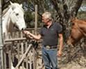 Lending a helping horse