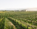SIP celebrates 10 years of certifying sustainable vineyards and the addition of a winery program