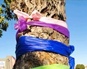 Ribbons on city-owned trees spark a debate in Grover Beach