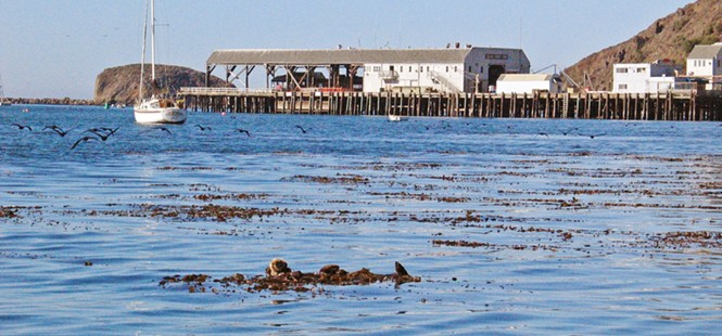 Port San Luis considers extending COVID-19 relief to two businesses