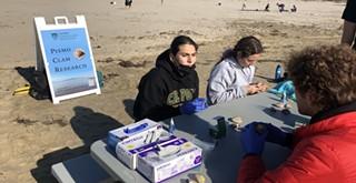 Cal Poly surveys Pismo clams for growth