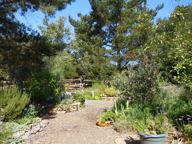 Learn about and enjoy beautiful mediterranean plants