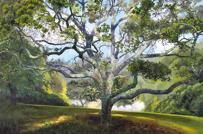 A GREAT OAK Blooming Apples is painted on a 4- by 5-foot canvas and is among Wolpert's collection at the SLO Museum of Art.