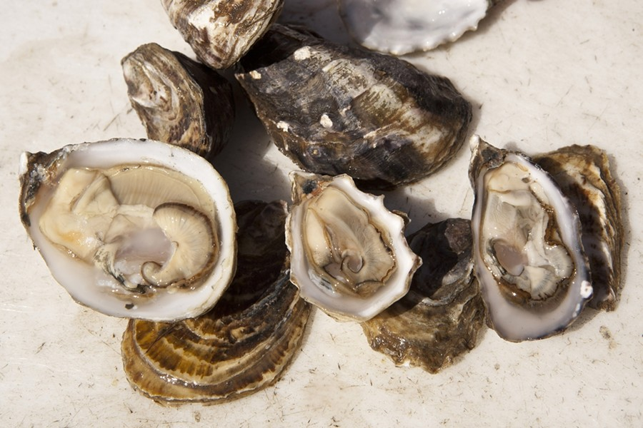 THE CHOICEST OYSTERS :  The Morro Bay Oyster Company will be shucking oysters at the aphrodisiac lounge. - PHOTO BY STEVE E. MILLER