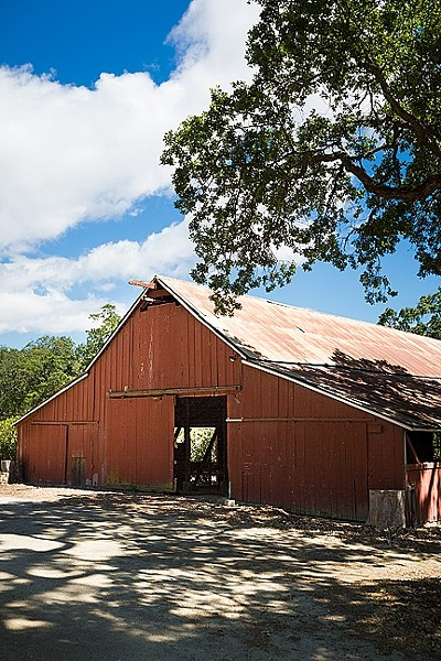 ANOTHER ONE BITES THE DUST:  The old red dairy barn on Pasolivo's property on Vineyard Drive west of Templeton will be demolished as part of the company's plans to expand olive oil production, ramp up their retail, and hold events. - FILE PHOTO BY KAORI FUNAHASHI