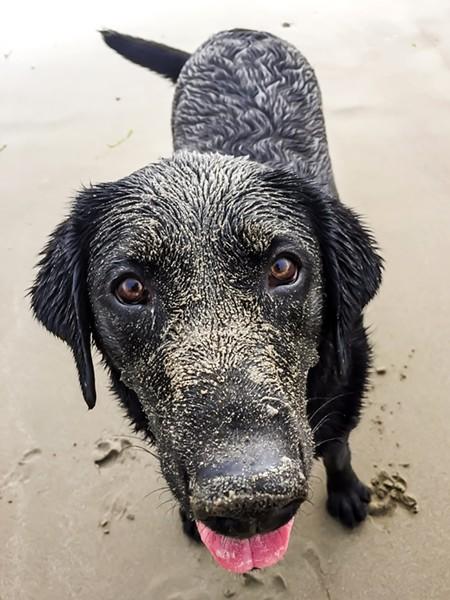 Sand dog. - PHOTO BY JAYSON MELLOM