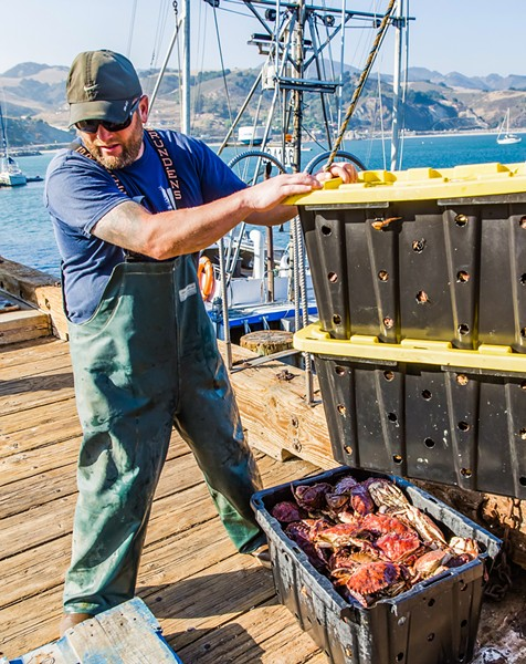 GRAB SOME CRAB Eagle deckhand Justin Jewell unloads the day's catch of rock crab and conch at Port San Luis. - PHOTO BY JAYSON MELLOM