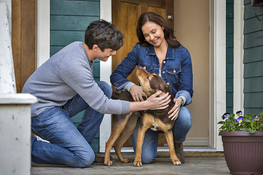 FAMILIAR BUT SWEET (Left to right) Lucas (Jonah Hauer-King), Bella (Shelby the dog voiced by Bryce Dallas Howard), and Terri (Ashley Judd) make a home together in the family adventure, A Dog's Way Home. - PHOTO COURTESY OF COLUMBIA PICTURES CORPORATION