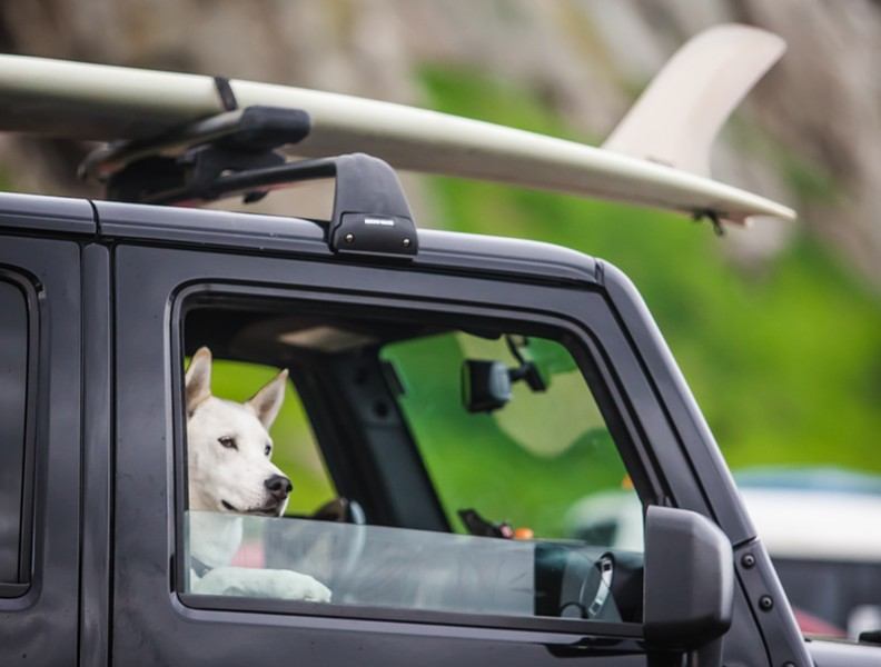 Surf Dog - PHOTO BY JAYSON MELLOM