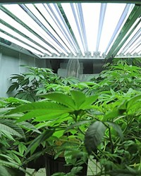 APPROVED On Sept. 10, SLO County approved a cannabis greenhouse fewer than 1,000 feet from Los Ranchos Elementary School.