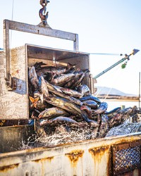 OUT OF WATER Dungeness crab fishing season started more than a month late at the end of 2020 due to new state regulations brought about by whale entanglements.