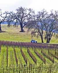 DECLINES San Luis Obispo County's 2020 crop report shows that wine grapes decreased in value compared to 2020.
