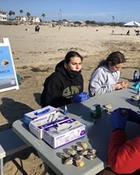 SUPPORTING SCIENCE A group of Cal Poly students, from undergraduate to graduate students, volunteered to pick, tag, and release clams for research.