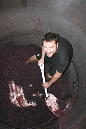 WINO'S PARADISE :  The author climbed into a barrel of Cabernet Sauvignon grapes at Silver Horse Winery in Paso Robles, where he helped out—purely for research. - PHOTO BY STEVE KROENER